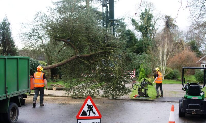 Large Tree Felling with Crane