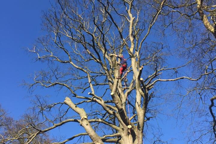 Tree Removal in Bury St Edmunds & Suffolk