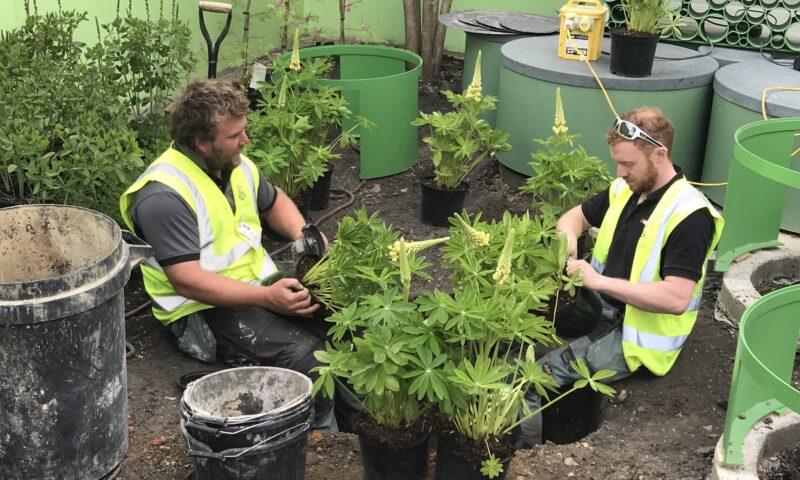 Tree Planting Bury St Edmunds