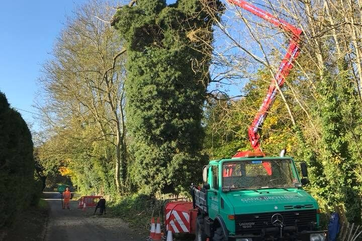 Sectional Felling Dismantling in Bury St Edmunds & Suffolk