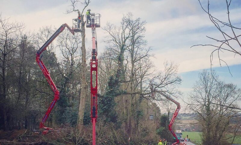 Roadside Tree Management in Bury St Edmunds & Suffolk