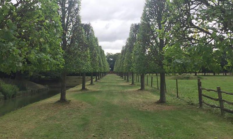 Tree Pruning & Tree Cutting