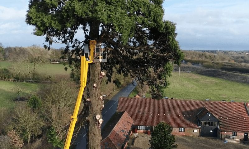 Tree Pruning & Tree Cutting in Bury St Edmunds & Suffolk