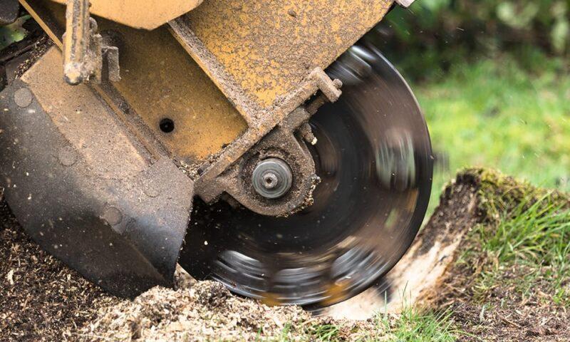 Stump Grinding & Treatment in Bury St Edmunds & Suffolk